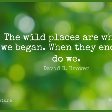 Short Nature Quote by David R. Brower about Wild Places,Ends for WhatsApp DP / Status, Instagram Story, Facebook Post.