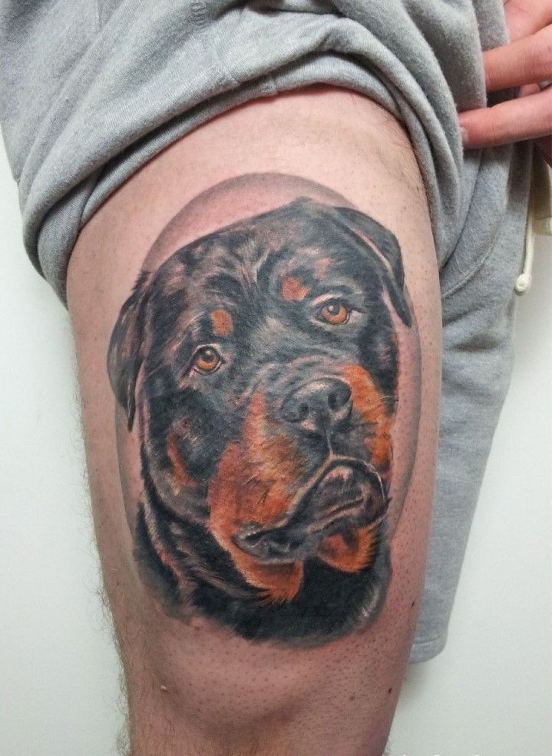 Realistic Colorful Rottweiler Head, Thigh Tattoo Design