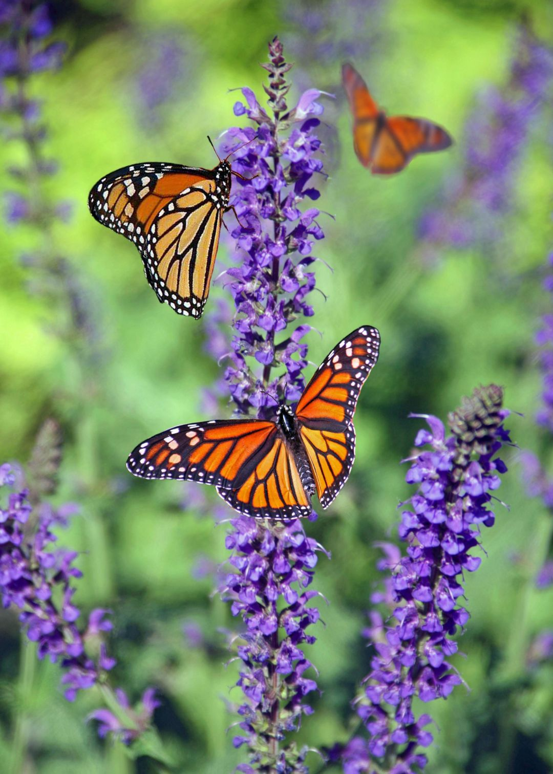 40+ Aesthetic Butterfly Images, HD Photos (1080p ...