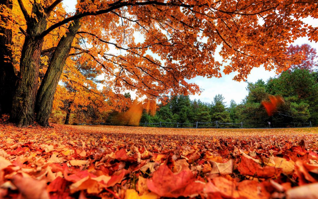 autumn aesthetic laptopandroid iphone desktop hd backgrounds wallpapers 1080p 4k