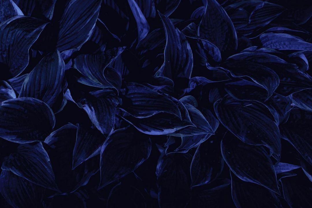 35 Dark Blue Aesthetic Tumblr Android Iphone Desktop Hd Backgrounds Wallpapers 1080p 4k 1200x800 2020