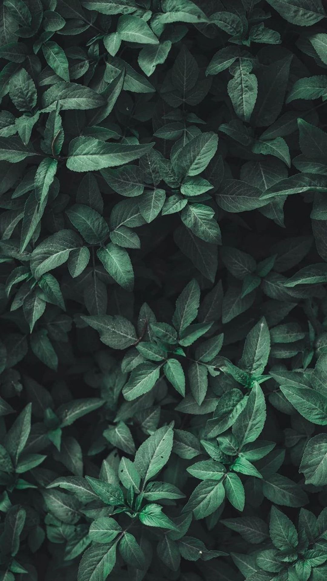 75 Green Aesthetic Tumblr Android Iphone Desktop Hd Backgrounds Wallpapers 1080p 4k 1080x1920 2020