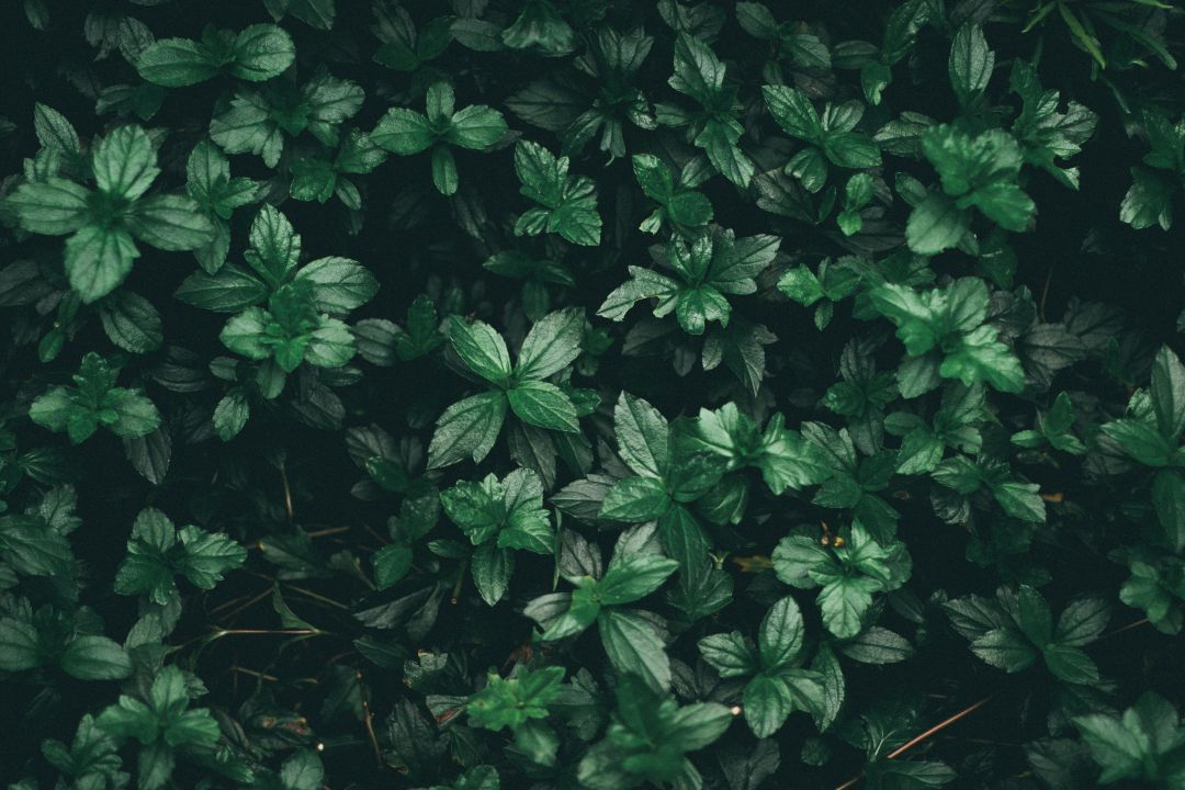 Green Wallpaper Aesthetic Tumblr