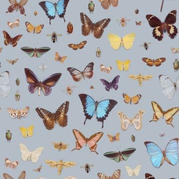 40 Aesthetic Butterfly Android Iphone Desktop Hd