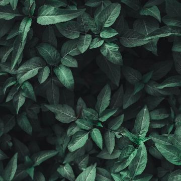 Green and Black Aesthetic - Android, iPhone, Desktop HD Backgrounds / Wallpapers (1080p, 4k)