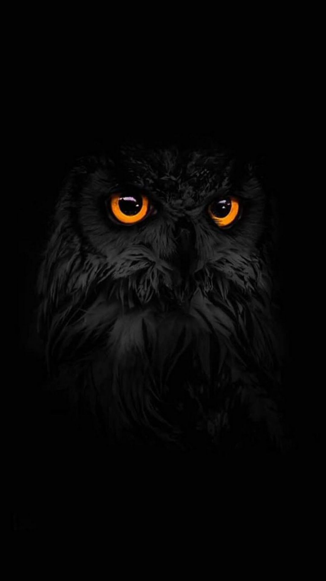 40 Black And White Owl Android Iphone Desktop Hd Backgrounds Wallpapers 1080p 4k 1080x1920 2020