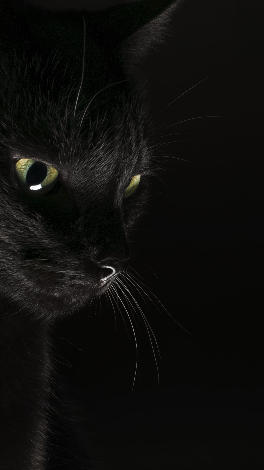 50 Black Cat Android Iphone Desktop Hd Backgrounds Wallpapers 1080p 4k 1080x1920 2020