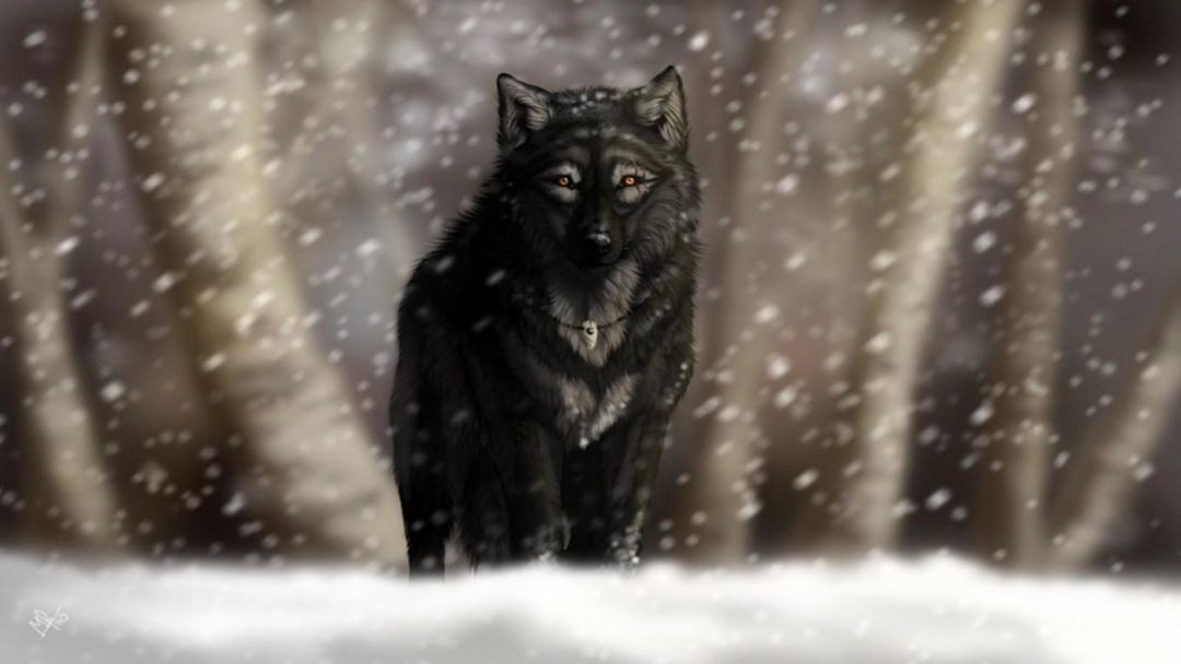 120 Black Wolf Android Iphone Desktop Hd Backgrounds Wallpapers 1080p 4k 1920x1080 2020