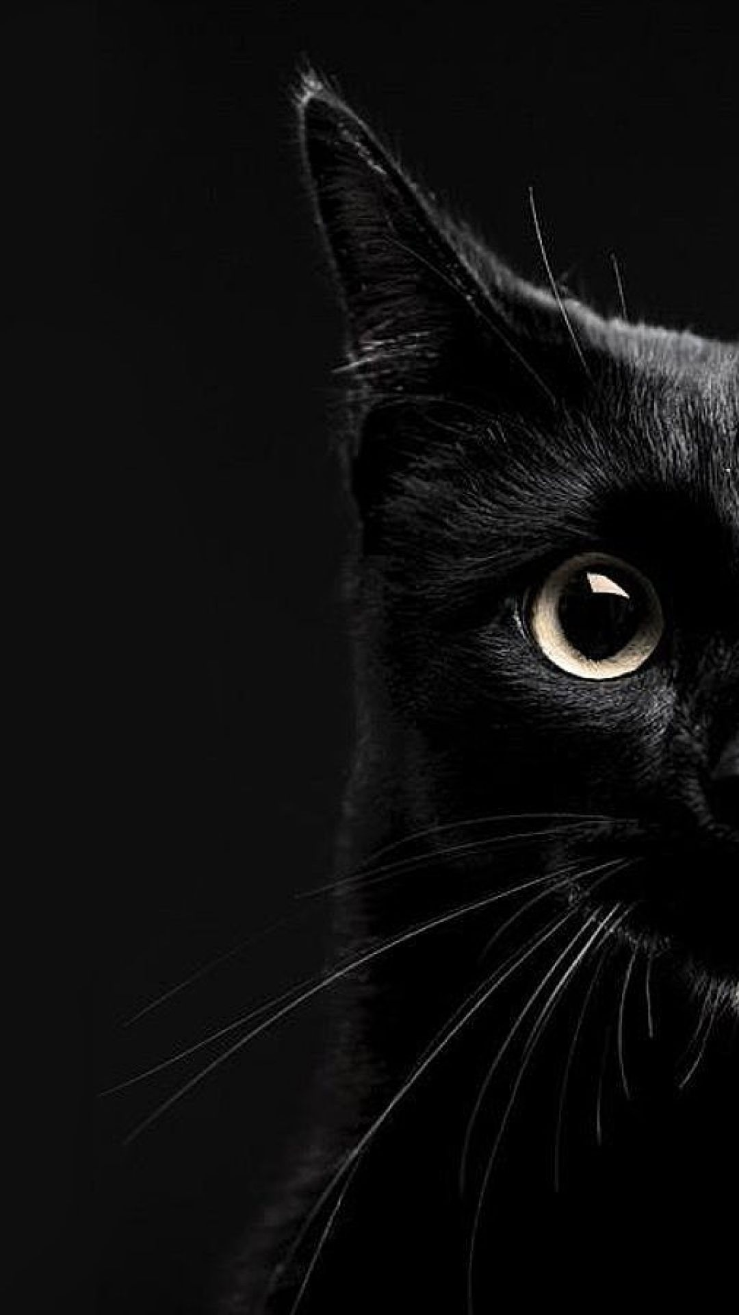 95 Cat Android Iphone Desktop Hd Backgrounds Wallpapers 1080p 4k 1080x1920 2020
