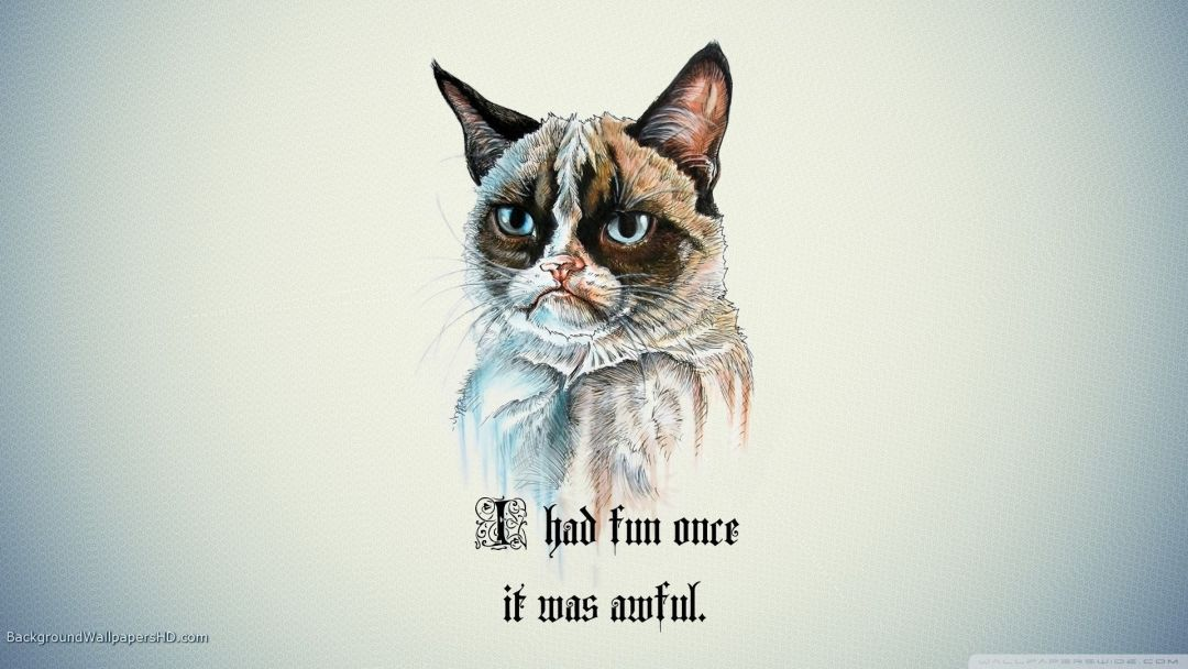 205 Cool Cat Android Iphone Desktop Hd Backgrounds Wallpapers 1080p 4k 1920x1080 2020