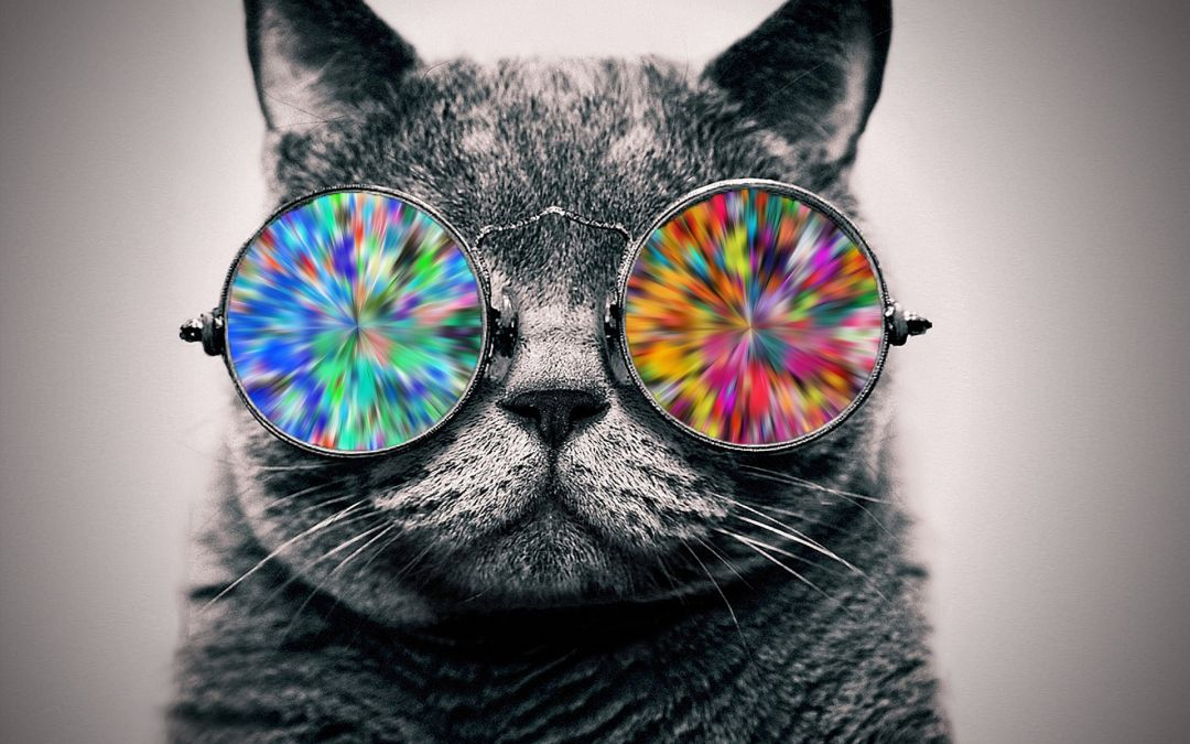 205 Cool Cat Android Iphone Desktop Hd Backgrounds Wallpapers 1080p 4k 1920x1200 2020