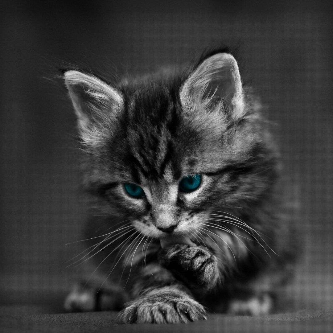 205 Cool Cat Android Iphone Desktop Hd Backgrounds Wallpapers 1080p 4k 2048x2048 2020
