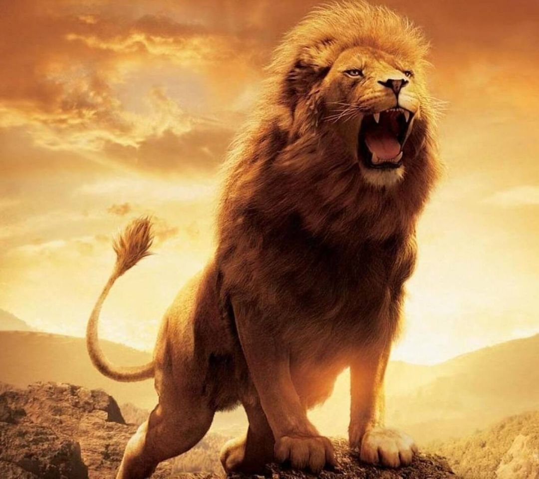 110 Cool Lion Android Iphone Desktop Hd Backgrounds Wallpapers 1080p 4k 1440x1280 2021