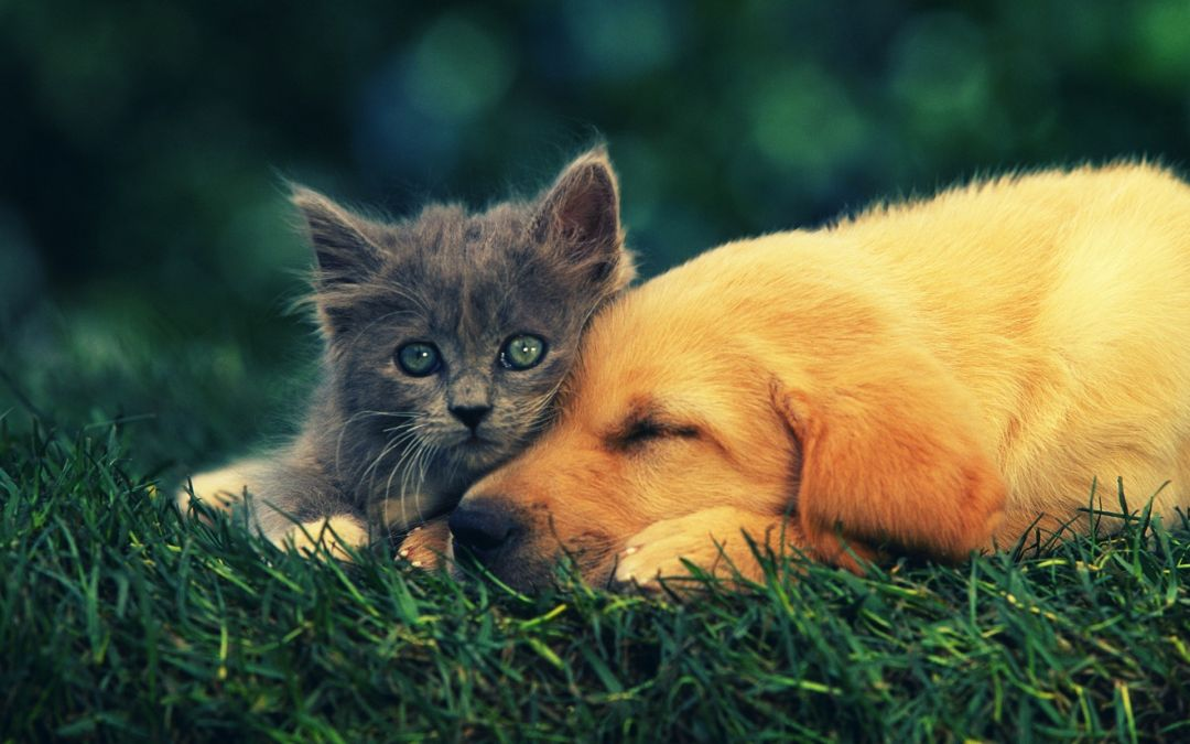 50 Cute Cats And Dogs Android Iphone Desktop Hd Backgrounds Wallpapers 1080p 4k 1920x1200 2020