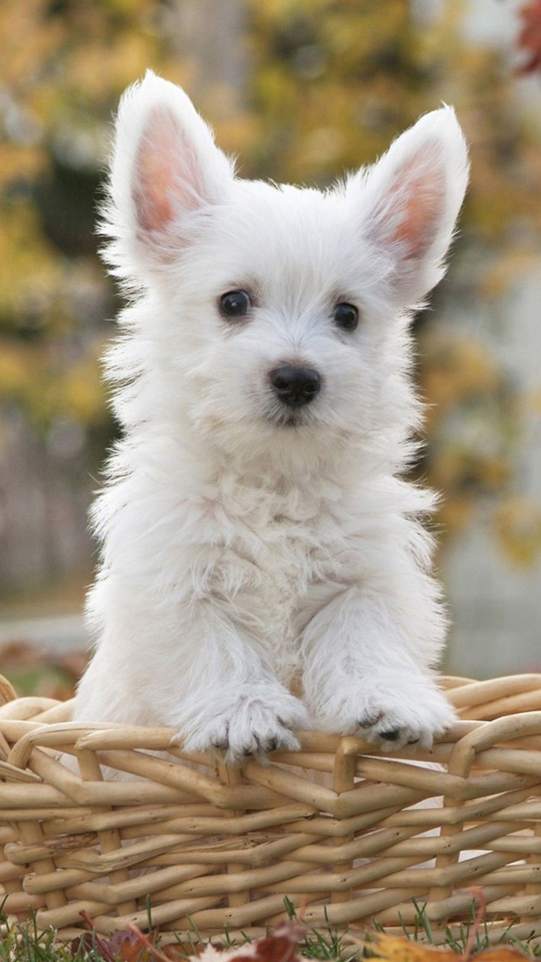 55 Cute Dog Android Iphone Desktop Hd Backgrounds Wallpapers 1080p 4k 1080x1920 2020