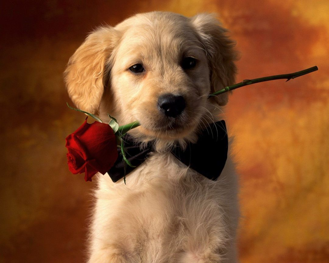 55 Cute Dog Android Iphone Desktop Hd Backgrounds Wallpapers 1080p 4k 2560x2048 2020