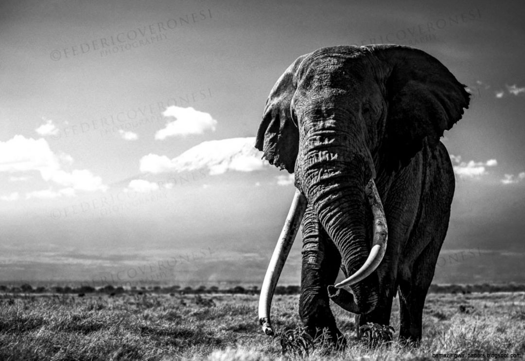 65+ Elephant - Android, iPhone, Desktop HD Backgrounds ...