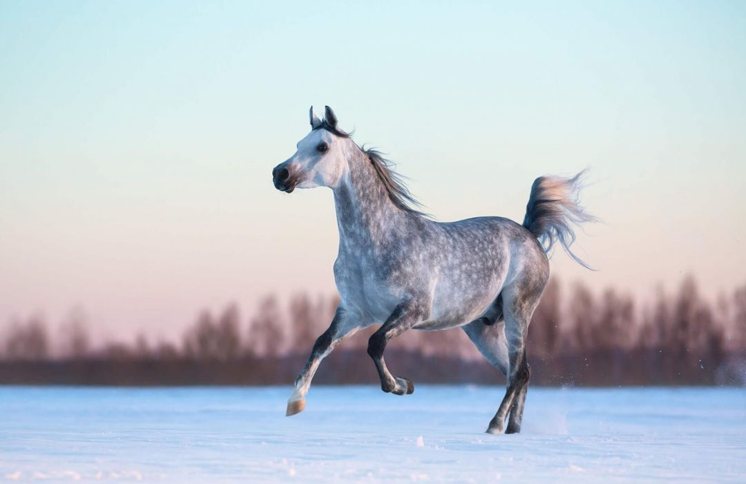 40 Horse Android Iphone Desktop Hd Backgrounds Wallpapers 1080p 4k 1650x1070 2020