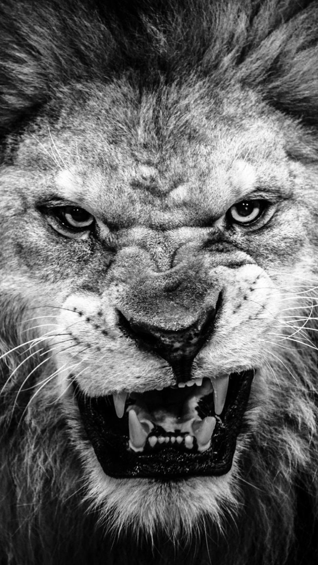 45 Lion Wallpaper Black And White Android Iphone Desktop Hd Backgrounds Wallpapers 1080p 4k 1080x1920 2020