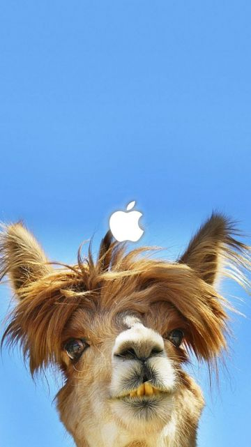 45 Funny Camel Android Iphone Desktop Hd