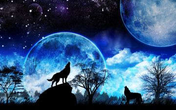 galaxy wolfandroid iphone desktop hd backgrounds wallpapers 1080p 4k lqebf