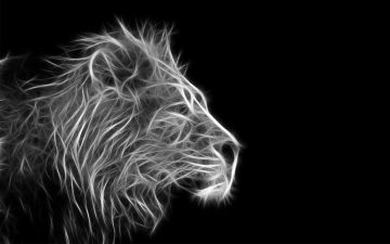 45 Lion Wallpaper Black And White Images Hd Photos 1080p