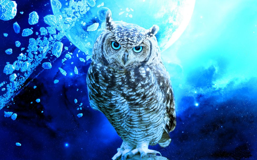 Owl iphone - Android, iPhone, Desktop HD Backgrounds / Wallpapers (1080p, 4k) (436258) - Animals / Birds