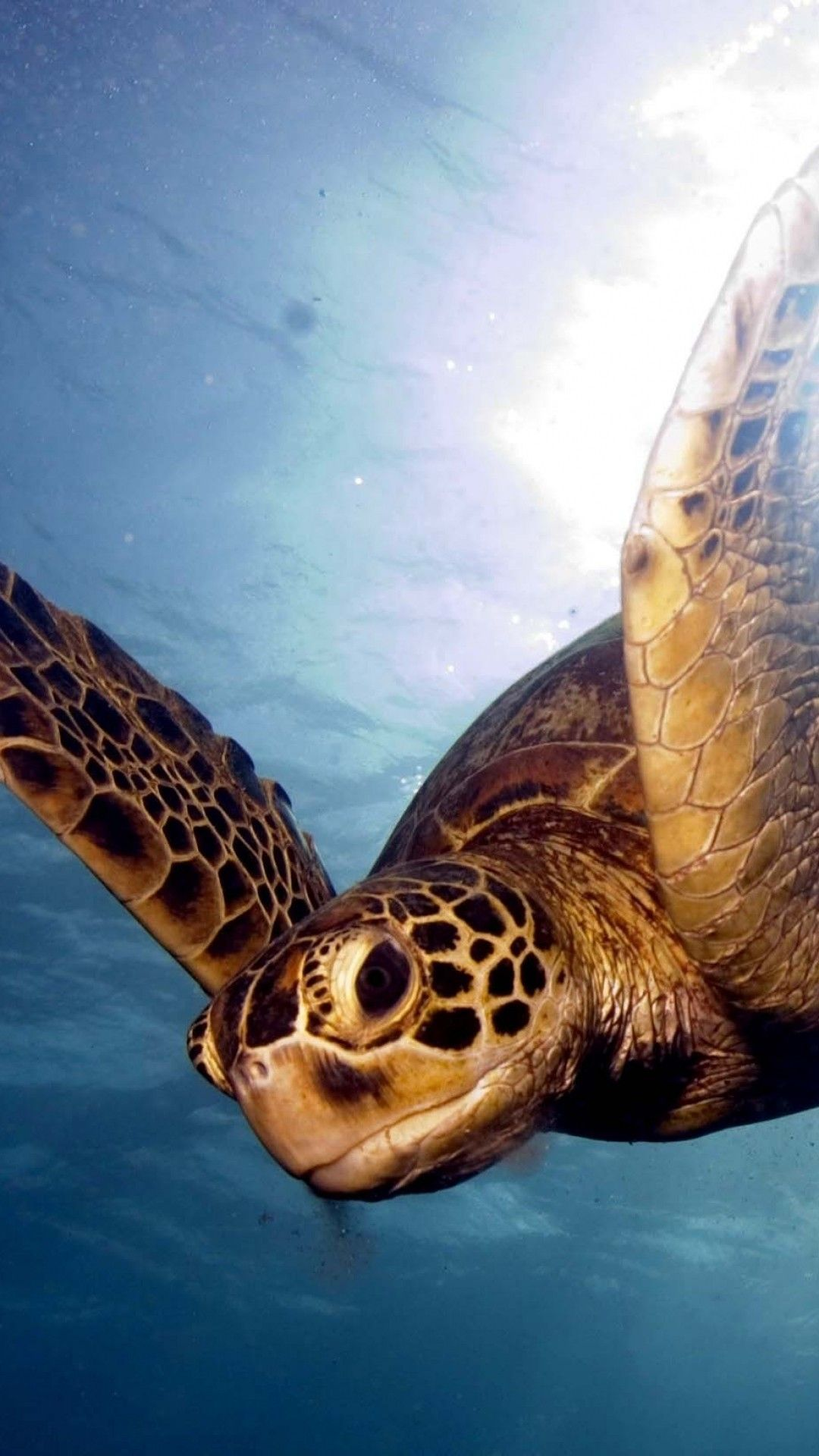 50 Sea Turtle Wallpaper Backgrounds Android Iphone