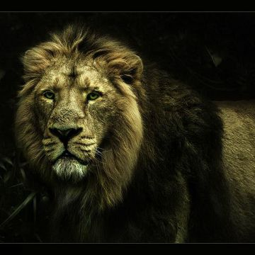 50+ Cool Lion - Android, iPhone, Desktop HD Backgrounds ...