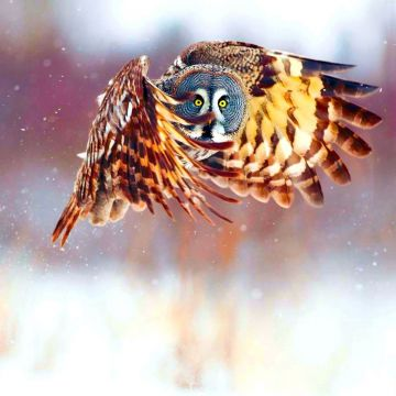 Owl HD Wallpaper and Background Image - Android / iPhone HD Wallpaper Background Download