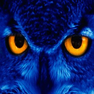Blue owl iphone wallpaper - Android / iPhone HD Wallpaper Background Download
