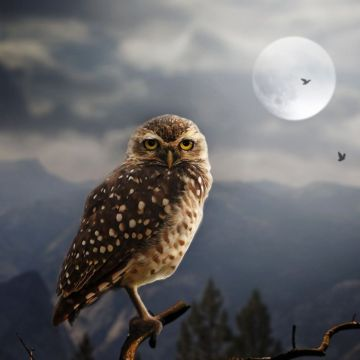 Moon Fantasy Owl iPhone HD 4k Wallpaper, Image - Android / iPhone HD Wallpaper Background Download