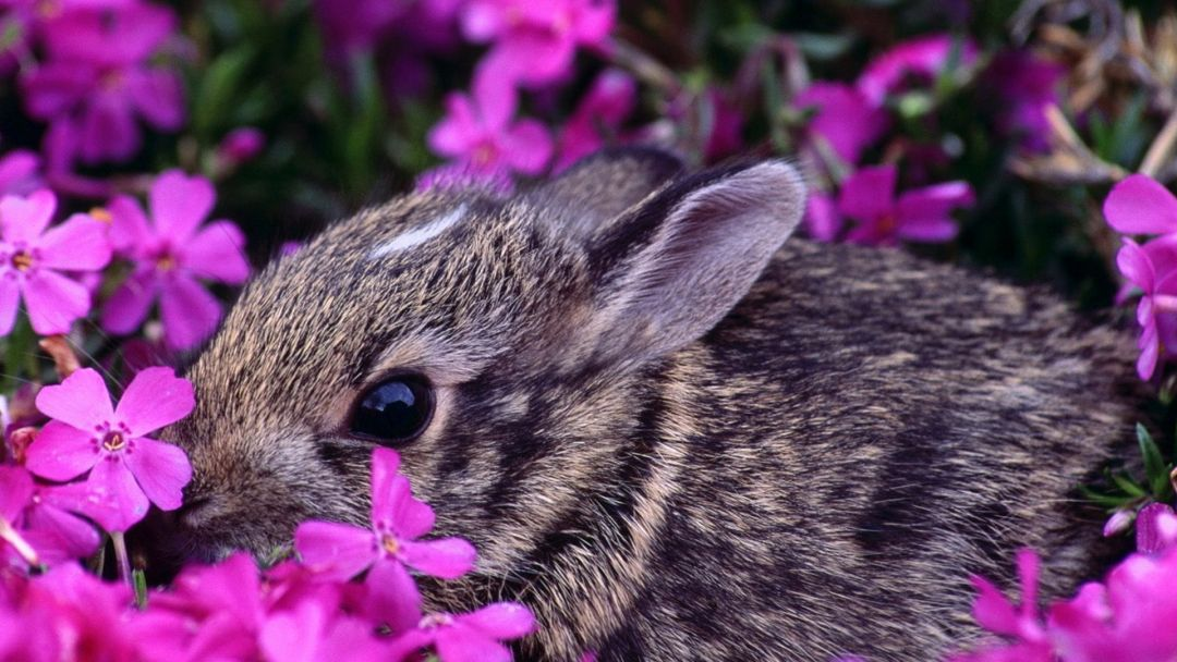 45+ Spring Baby Animals Desktop - Android, iPhone ...
