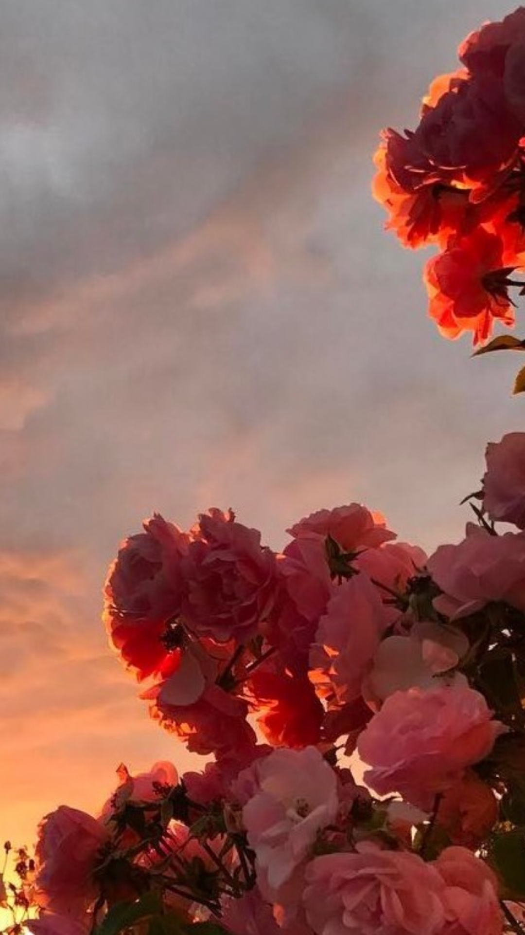 190+ Aesthetic Flowers - Android, iPhone, Desktop HD ...