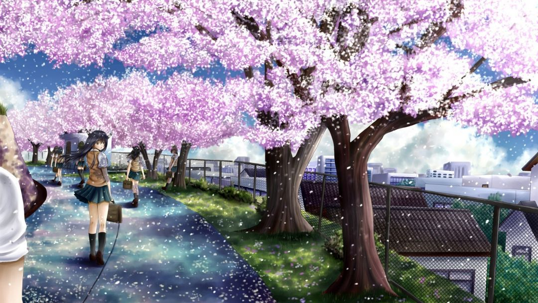 65 Anime Cherry Blossom Android Iphone Desktop Hd Backgrounds Wallpapers 1080p 4k 1920x1080 2020