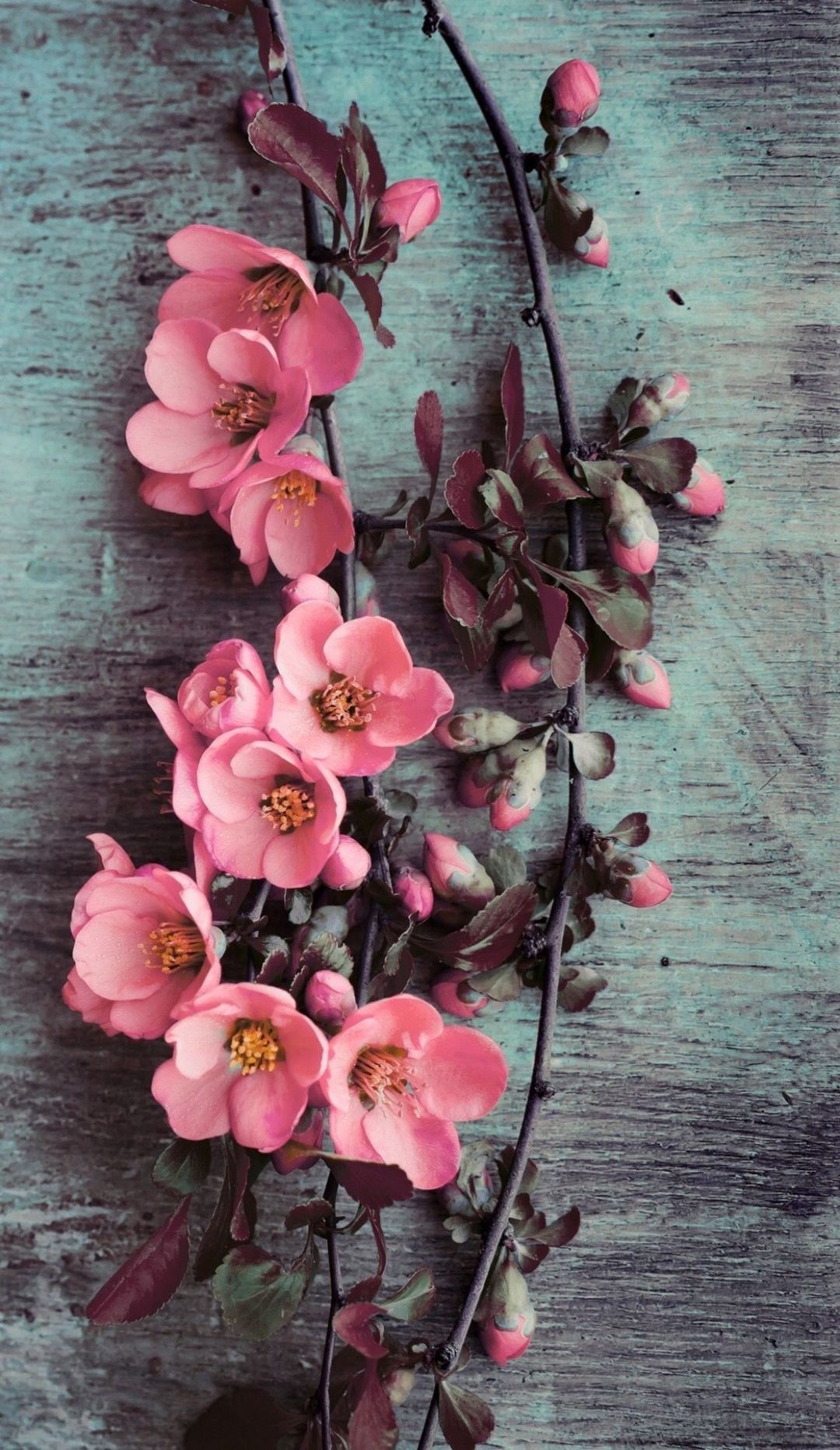 65 Pink Flower Android Iphone Desktop Hd Backgrounds Wallpapers 1080p 4k 1113x1920 2020