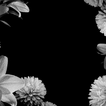 Black and White Flower - Android, iPhone, Desktop HD Backgrounds / Wallpapers (1080p, 4k)