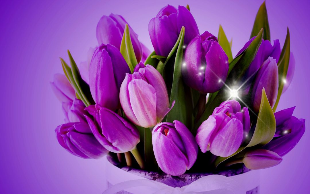 Tulips background - Android, iPhone, Desktop HD Backgrounds / Wallpapers (1080p, 4k) (408726) - Flowers