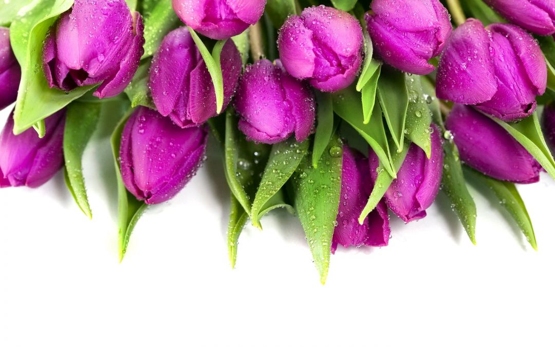 Tulips background - Android, iPhone, Desktop HD Backgrounds / Wallpapers (1080p, 4k) (408811) - Flowers