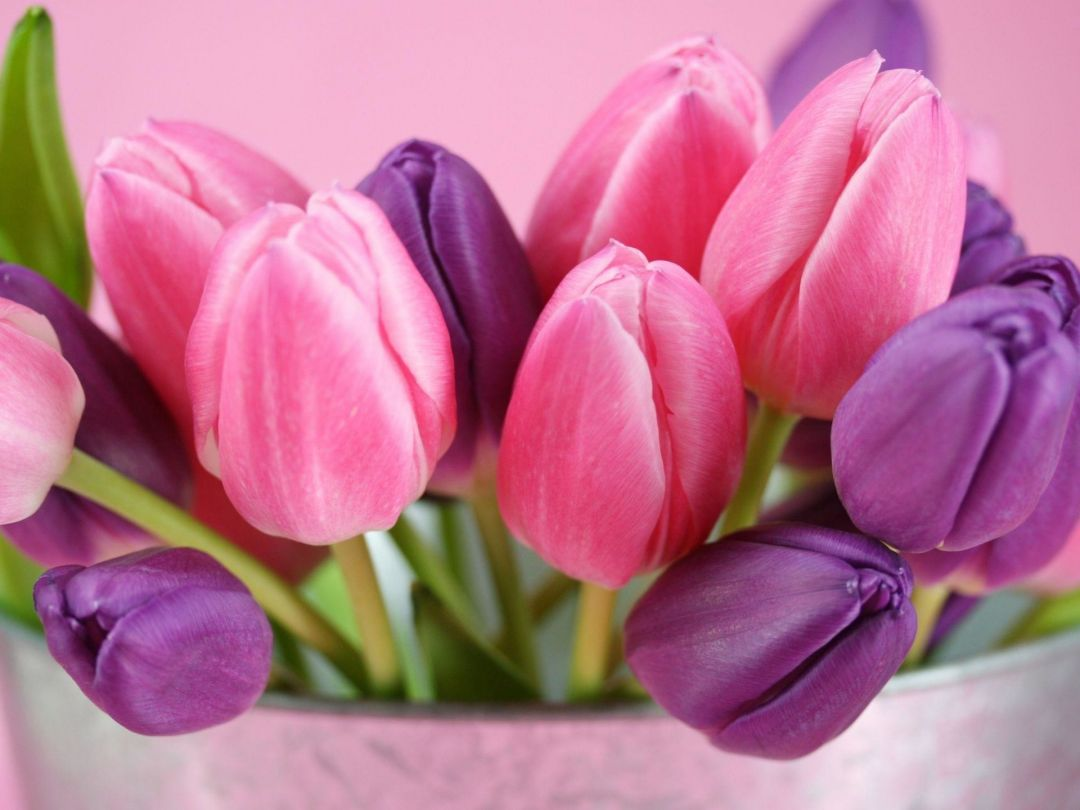 Tulips Background - Android, iPhone, Desktop HD Backgrounds / Wallpapers (1080p, 4k) (337476) - Flowers