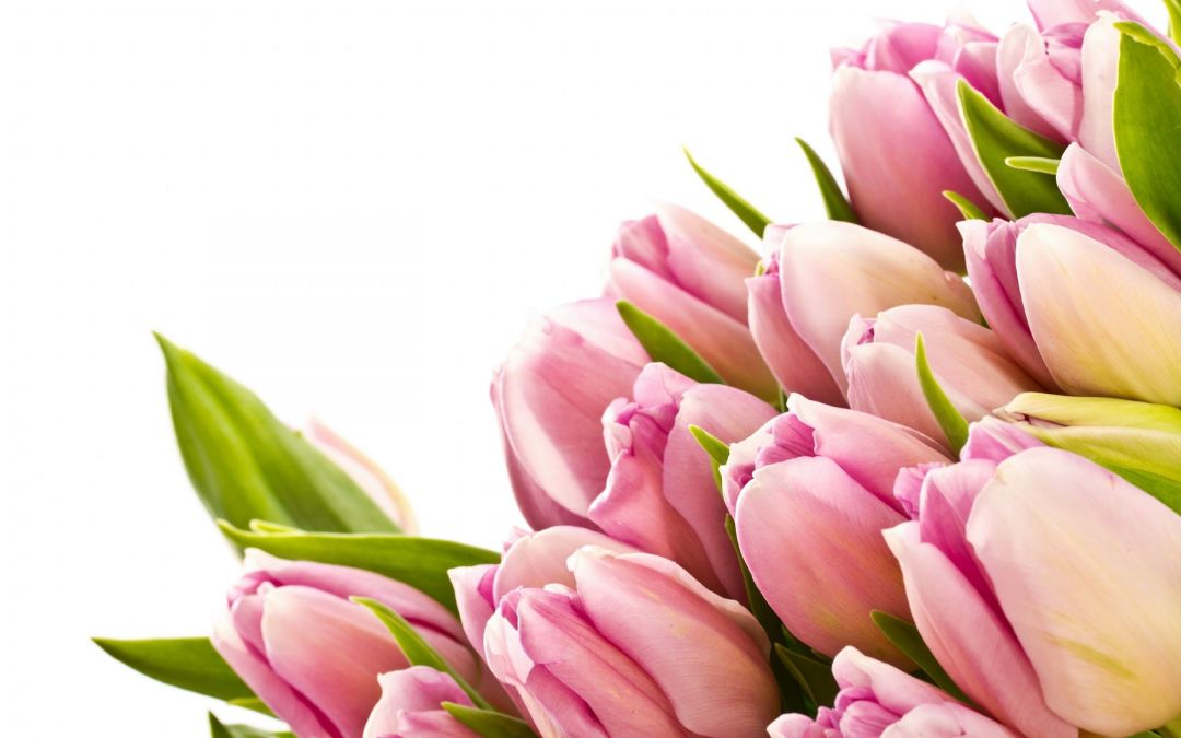 Tulips background - Android, iPhone, Desktop HD Backgrounds / Wallpapers (1080p, 4k) (408747) - Flowers