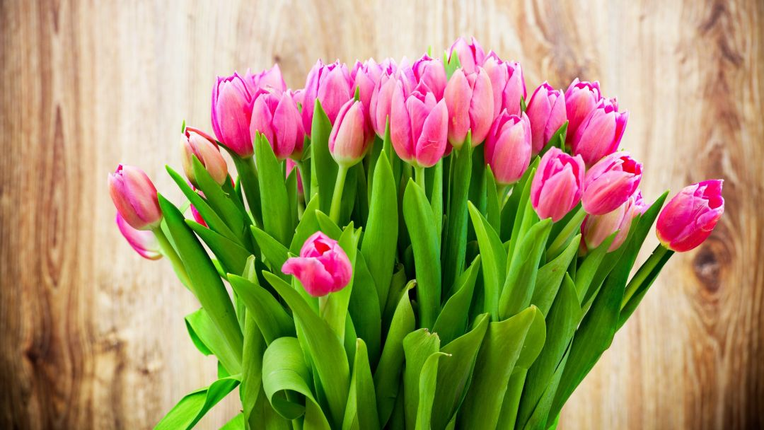 Tulips background - Android, iPhone, Desktop HD Backgrounds / Wallpapers (1080p, 4k) (408667) - Flowers