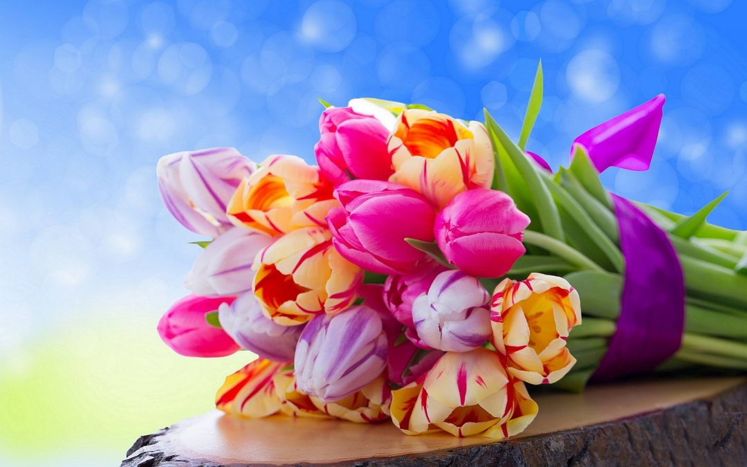 Tulips Background - Android, iPhone, Desktop HD Backgrounds / Wallpapers (1080p, 4k) (337518) - Flowers