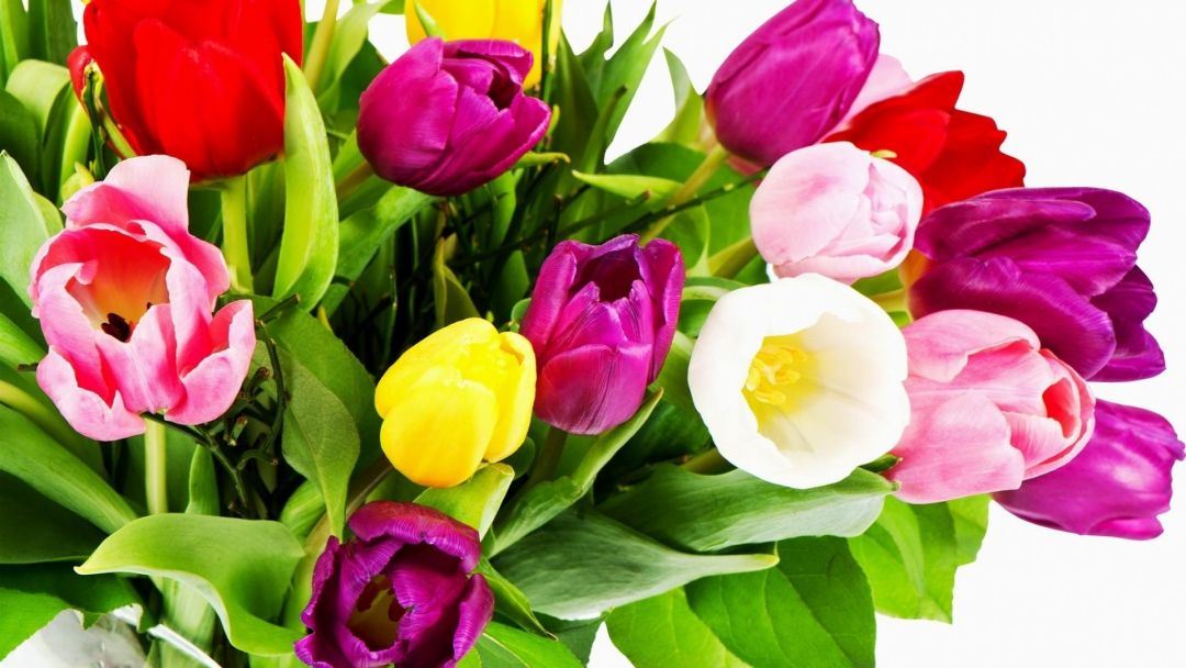 Tulips Background - Android, iPhone, Desktop HD Backgrounds / Wallpapers (1080p, 4k) (337408) - Flowers