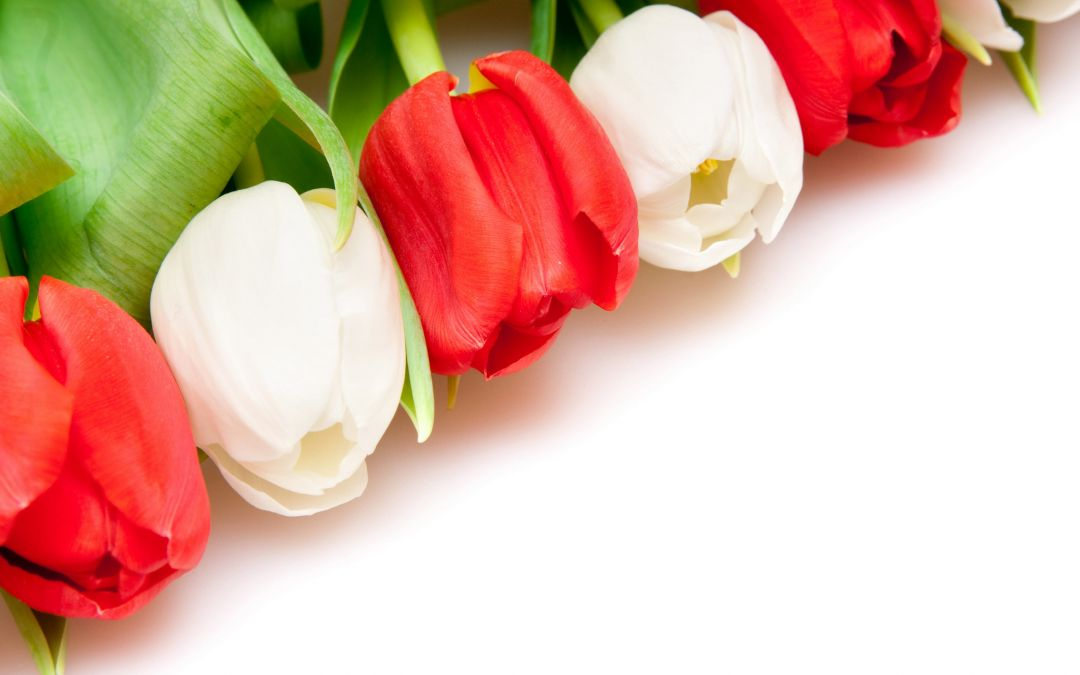 Tulips background - Android, iPhone, Desktop HD Backgrounds / Wallpapers (1080p, 4k) (408652) - Flowers