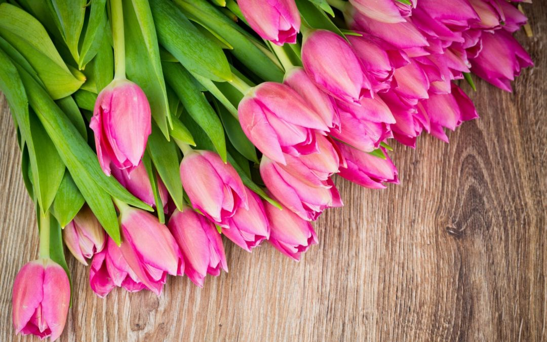 Tulips background - Android, iPhone, Desktop HD Backgrounds / Wallpapers (1080p, 4k) (408806) - Flowers