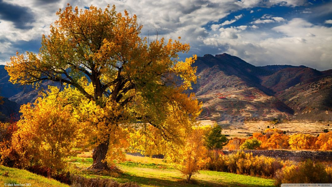 45 Beautiful Fall Scenery Android Iphone Desktop Hd Backgrounds Wallpapers 1080p 4k 2560x1440 2020