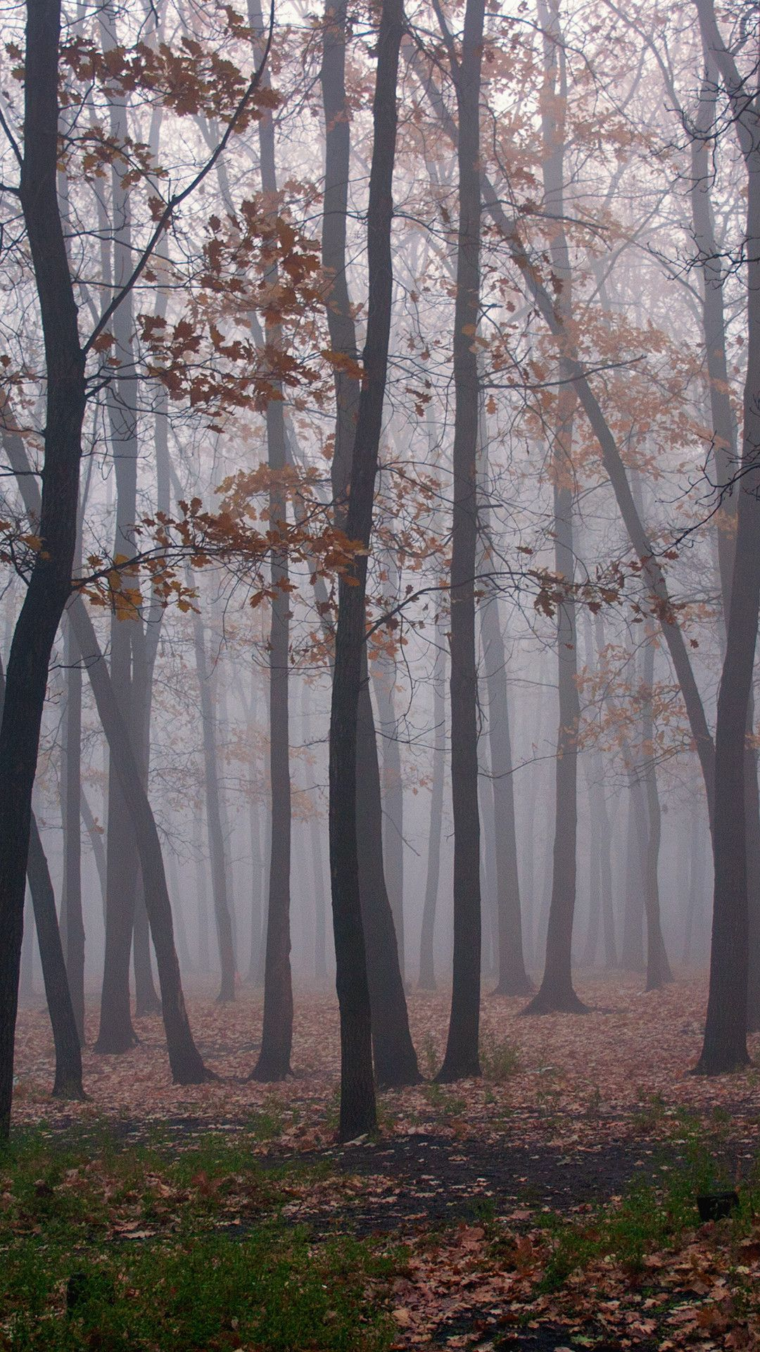 Foggy forest - Android, iPhone, Desktop HD Backgrounds / Wallpapers (1080p, 4k) (459129) - Nature / Landscapes