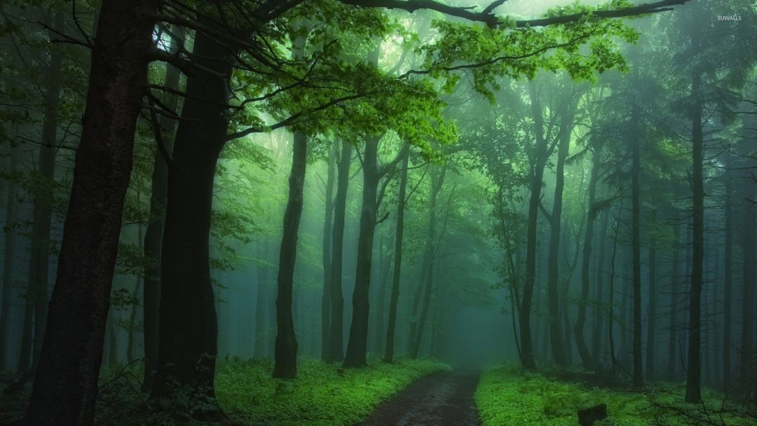 Foggy forest - Android, iPhone, Desktop HD Backgrounds / Wallpapers (1080p, 4k) (459090) - Nature / Landscapes