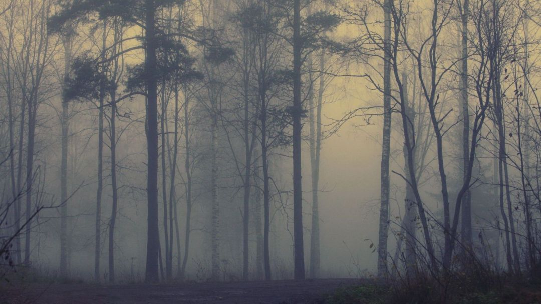 Foggy forest - Android, iPhone, Desktop HD Backgrounds / Wallpapers (1080p, 4k) (459096) - Nature / Landscapes